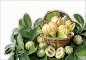 garcinia-cambogia-extract-300x208